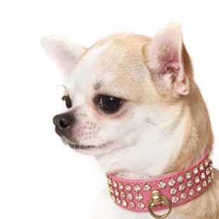 Collar Swaroski color rosa para perro.¡Combínalo con la correa!