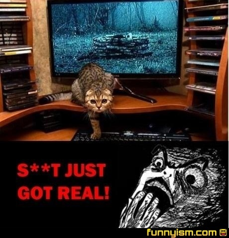 Yet another reason to not watch scary movies!!!! LOLLaugh, Creepy Cat, Watches Scary, Funny Stuff, Humor, Funny Animal, Scary Movie, Rings Cat, Kitty