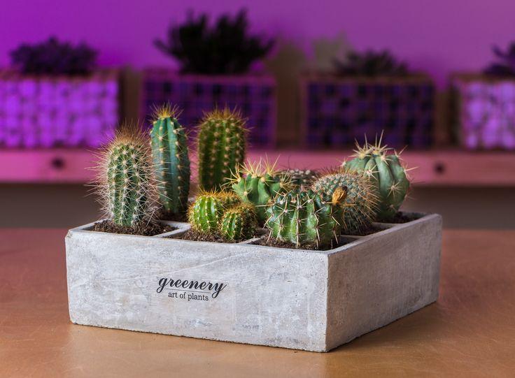 #greenery #greeneryartofplants #succulents #cactus #plants #chania #crete
