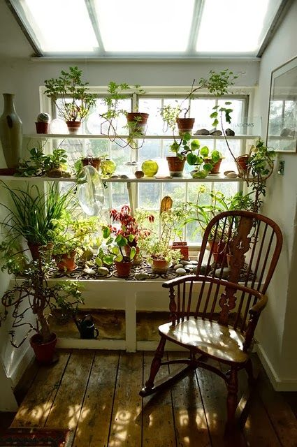 love the way plants look in front of a window!
