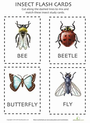 Insect Flashcards Insects Worms Kindergarten