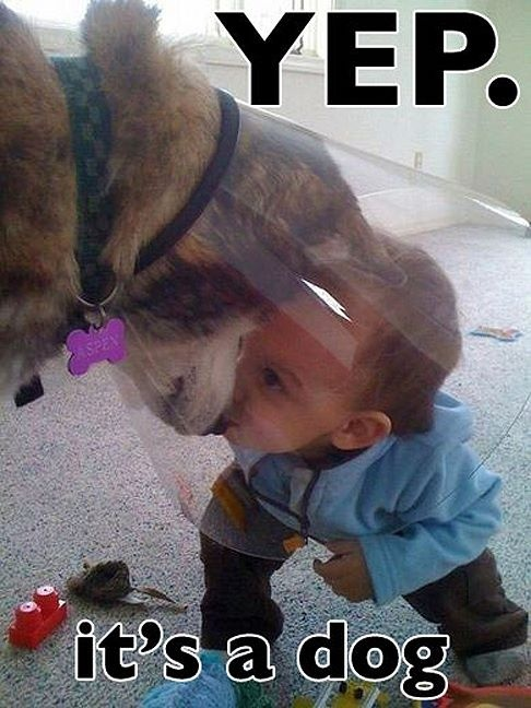 I love how all of our dogs instinctively knew to be gentle with our babies and protective of our kids and grandkids.