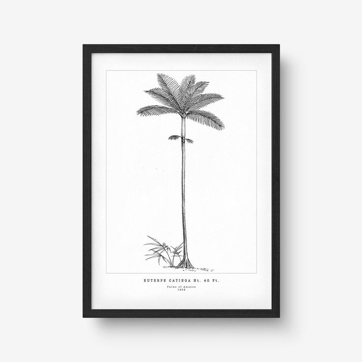Palms of Amazon Euterpe Print