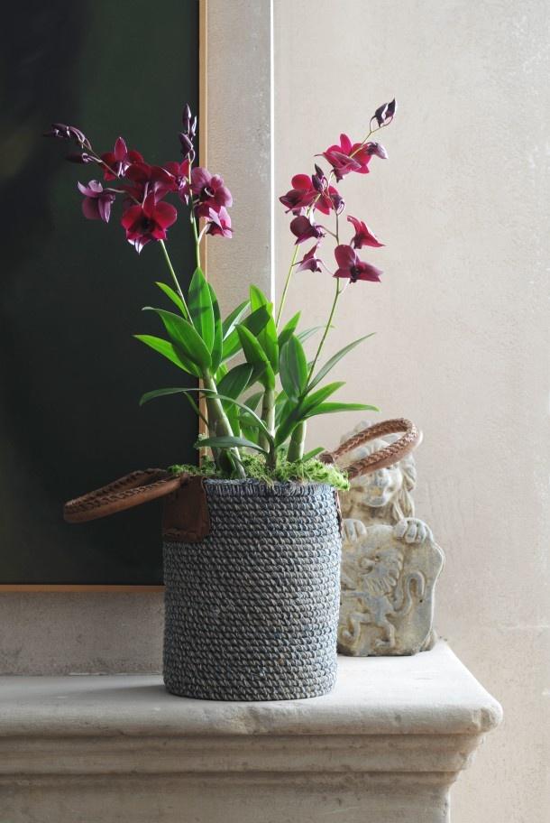 Sierlijke orchidee in stoere pot