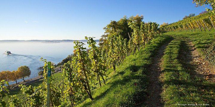 vinjournalen.se -  Vin Fakta : Upplev den tyska vintraditionen i underbara Baden |  Spätburgunder Kanske planerar du redan inför semester och sommar? Vad sägs om en vandring genom vingårdarna i det natursköna Badenområdet en upplevelse för både vinentusiaster och kräsna läckergommar för att sedan ta med sig en och annan flaska hem. Inbäddat i det vackra kulturlandskapet i Baden ... http://wp.me/p73gTR-35s