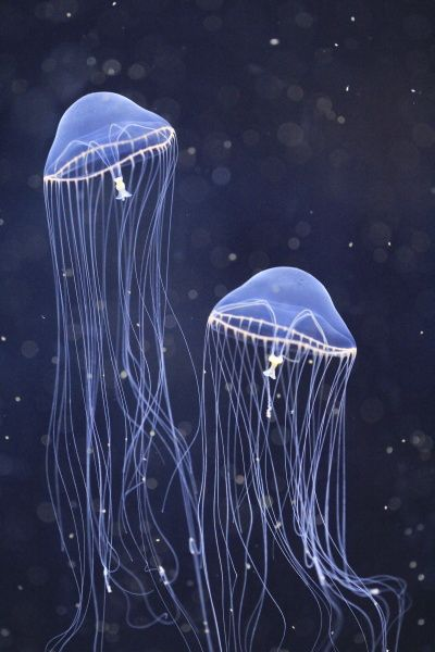 Photo jellyfish by c                                                                                                                                                                                 More