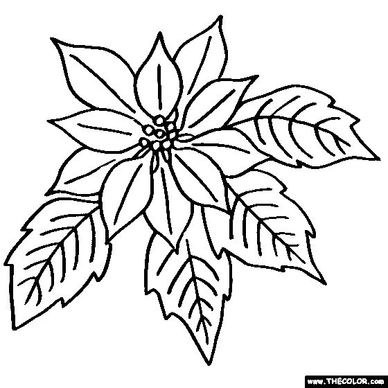 Poinsettia Flower Coloring Page | Color Poinsettia
