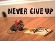 Sometimes the business of writing is like the mouse trap; ready to snap our heads off in an instant!  Like this brave little mouse, never give up on yourself.  Believe in yourself and your writing and  put your helmet on and get back in the game!  More: www.writeratplay.com