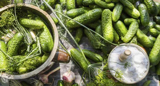 PEPINILLOS AGIDULCES (Gurkentopf)  1 kg de pepinillos - 1 l de vinagre - 750 ml de agua - 300 g de azúcar - 5 hojas de laurel - 1 cucharada de eneldo - 2 cucharadas de semillas de mostaza - 2 granos de ajo - Sal gruesa