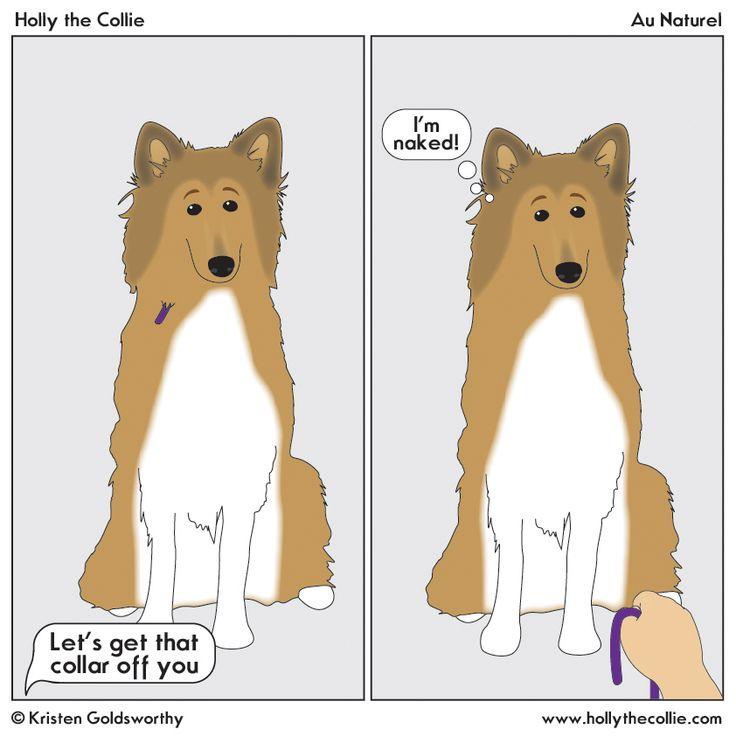 Au Naturel Sheep Dog Puppy German Shorthaired Pointer German