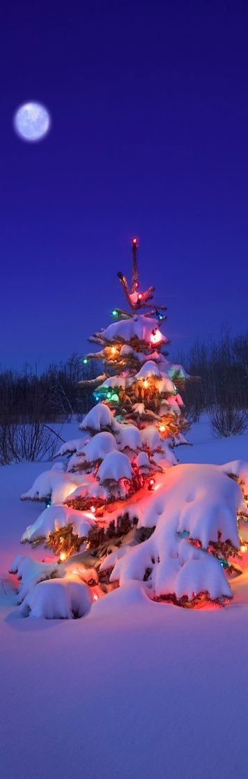 I love it when pine trees, glowing with Christmas lights, are covered in snow.  It's so beautiful!