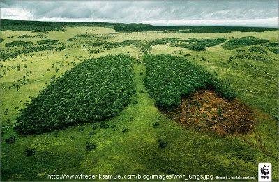 WWF_lungs_400.jpg (400×261)