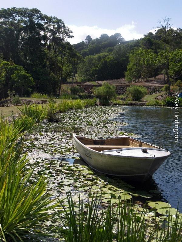 Maleny Botanic Gardens 2012