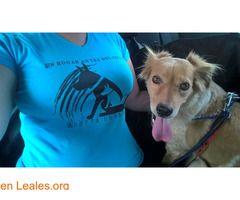 Daenerys del arcoiris  #Adopción #adopta #adoptanocompres #adoptar #LealesOrg  Contacto y info: Pulsar la foto o: https://leales.org/animales-en-adopcion/perros-en-adopcion/daenerys-del-arcoiris_i2823 ℹ  Sociable con perros y gatos. Fue rescatada junto con sus 8 cachorros de un zulo donde estaban malviviendo. Ahora ya ha salvo no tendrá más camadas en cada celo. Busca una familia que de paz y amor lo que le queda de vida.    Acerca de esta publicación:   Esta publicación NO ha sido creada…