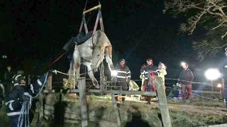 Horse rescued from cattle grid