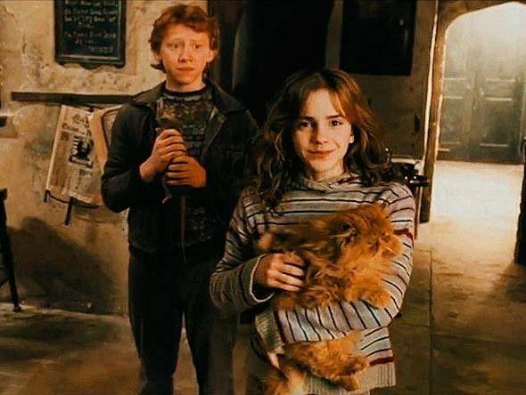 Romione   Hermione granger, Ron weasley, Draco malfoy