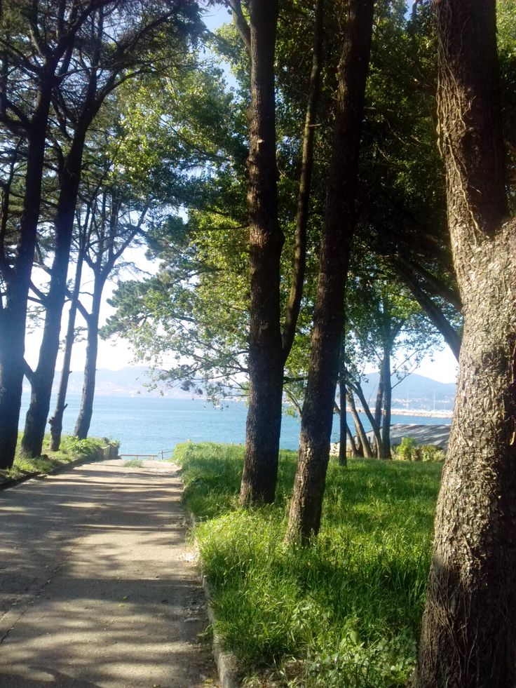 bebeteca. Galicia: Playa y bosque.Vigo.