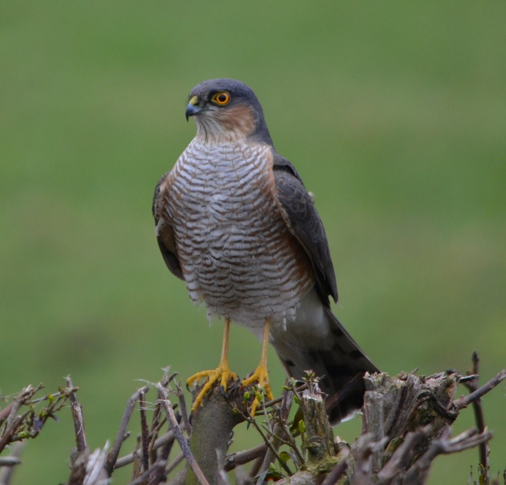 Sparrowhawk - Awareness that opportunities that seem small on the surface have the potential for great growth and expansion over time.