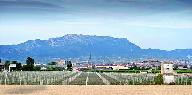 Pese a la situaciçón actual, aún sigue habiendo iniciativas de inversión en el mundo del vino, como es el caso de Bodegas Paternina que invierte en la plantación de un nuevo viñedo en Haro, iniciativa que no podemos menos que aplaudir y dar a conocer. https://plus.google.com/#116371303186530335270/posts