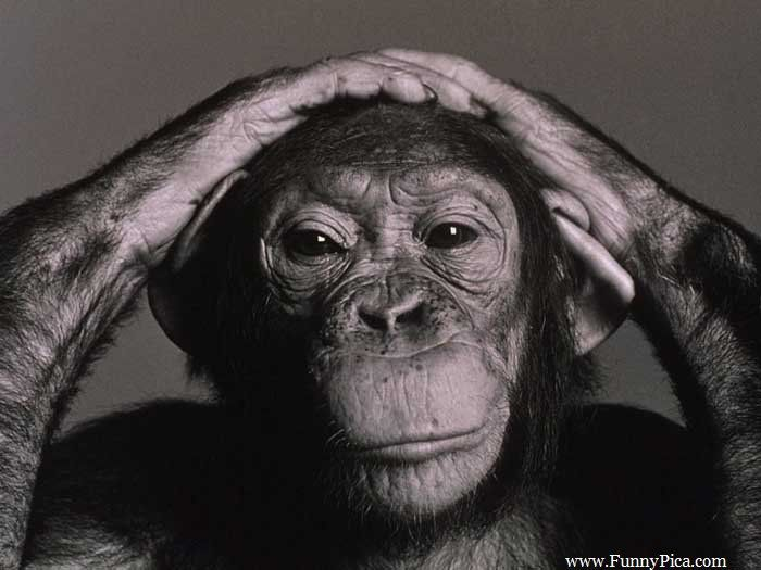 Love this pic.... Very wise-looking contemplative monkey