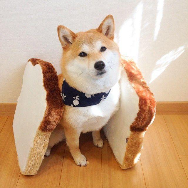 ★shiba★ sandwich