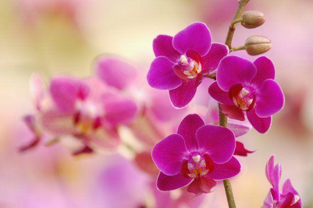 Comment Faire Refleurir Une Orchidee Avec Images Faire