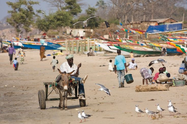Peanuts are one of the few things they grow in Gambia and are one of the country's largest exports. Gambia gained its independence from Britain in 1965. Help kids answer this online quiz to test how well they know Gambia, go here: http://easyscienceforkids.com/gambia-quiz-fun-free-interactive-general-quiz-questions-for-kids/