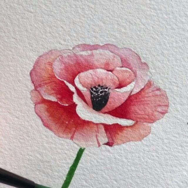 Mohnblume Aquarell Wasserfarben Malen Tutorial Blumenzeichnung Blumen Zeichnen