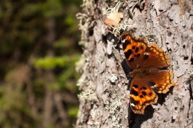 Prince Albert National Park http://www.kyanitephoto.com