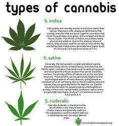 types of cannabis (marijuana)-marijuana growing guide