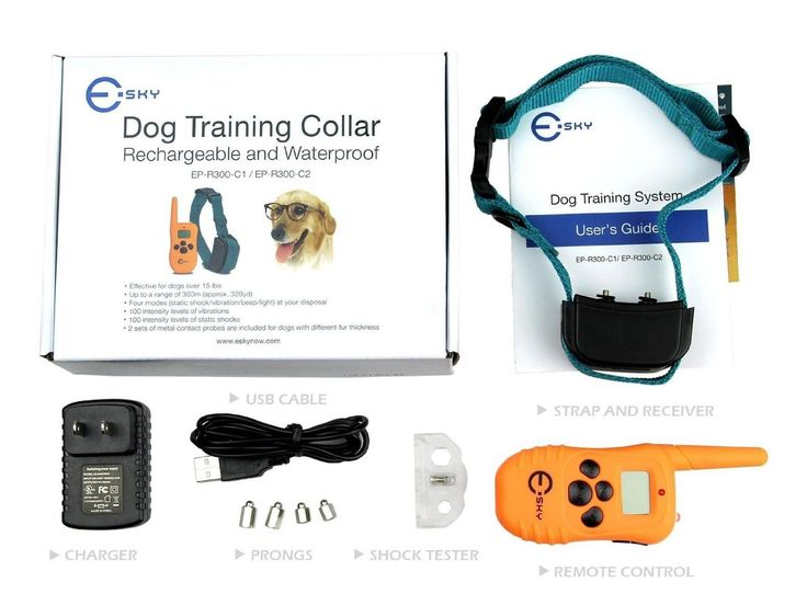 Best Rated Shock Collar For Small Dogs