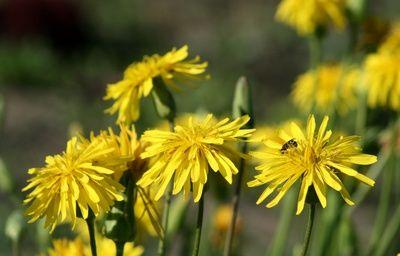 Arnika wirkt schmerzlindernd, sowie keim- und entzündungshemmend. Die Pflanze hilft bei Schwellungen, Prellungen oder Verstauchungen. Zutaten: 1 Handvoll Arnikablüten 500 ml Weingeist (50%) Zuberei...