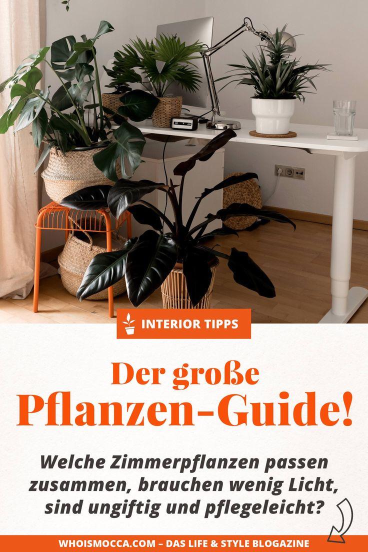 Mit grünen Zimmerpflanzen eine tolle Oase schaffen? Der große Grünpflanzen-Guide!