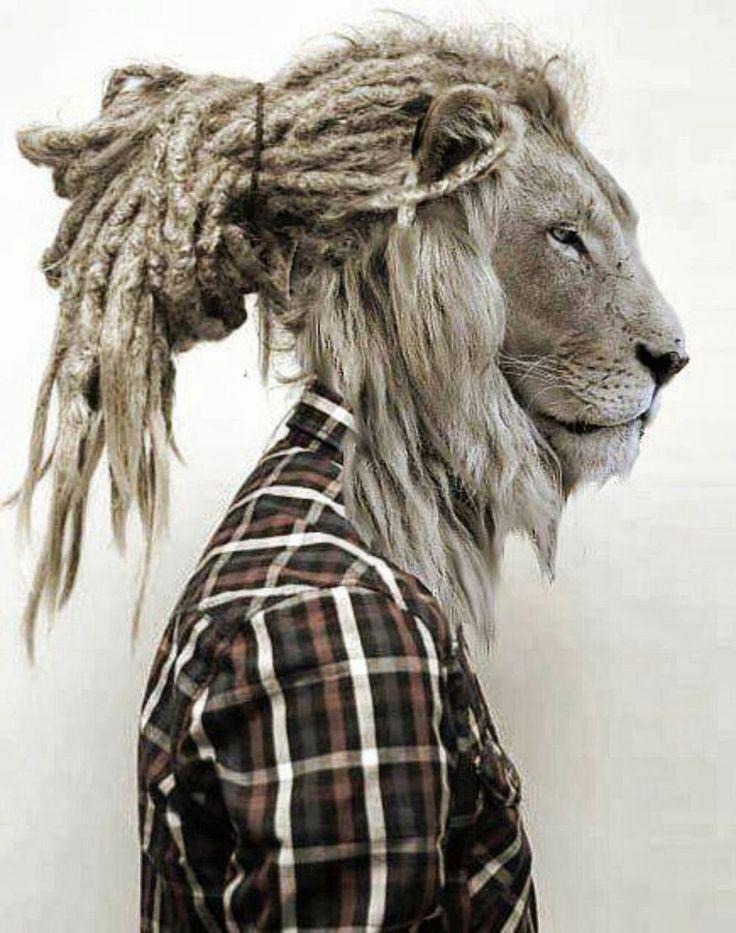 выложила картинки льва с дредами сейчас