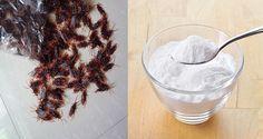 Voici des astuces simples et naturelles pour lutter contre une invasion de cafards...