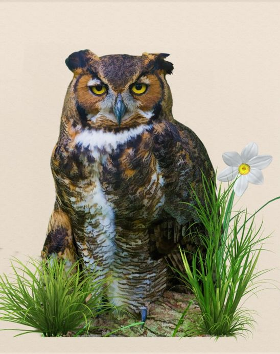 Great Horned #Owl on a Log Acrylic Wall #Art http://www.zazzle.com/great_horned_owl_on_a_log_acrylic_wall_art-256980917704509593?rf=238901250819094787 Sold by Zazzle