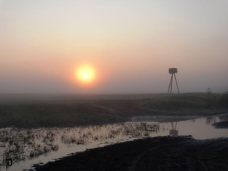 Biebrzański Park Narodowy - Biały Grąd o świcie