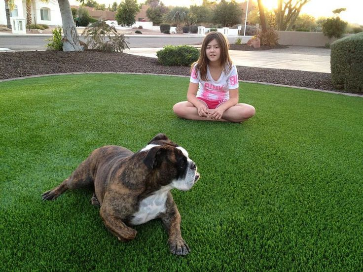 All of our products are pet & kid friendly. Let us provide the enhanced environment that a synthetic lawn will afford your family friends and pets  - click the link in our bio for a free quote #azluxurylawns #artificalturf #fakegrass #syntheticturf #syntheticgrass #landscaping #grass #gogreen #petfriendly #madeinamerica #nochinaturf #maketurfgreatagain