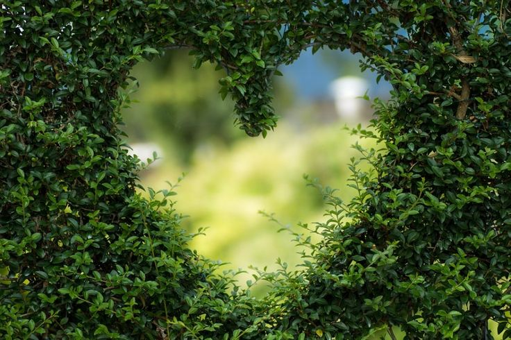 Красивое романтическое сердце, выросшее из листьев #картинки #фото #сердце #природа #любовь #растения #романтика