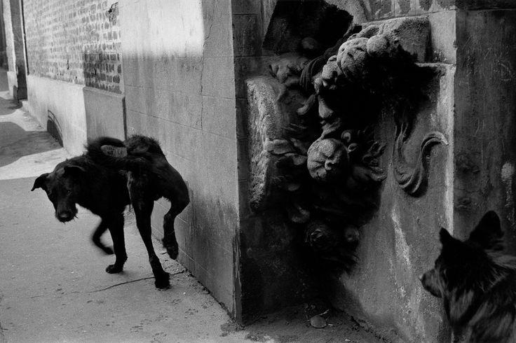 "Sergio Larrain FRANCE. Paris. 15th arrondissement. ""La Ruche"", artist's residence. 1959  Magnum Photos"