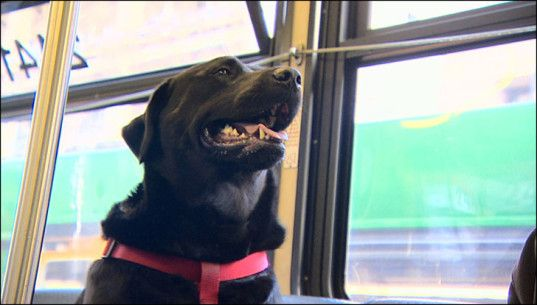 Smart Seattle dog rides the bus by herself to the dog park | Inhabitat - Sustainable Design Innovation, Eco Architecture, Green Building