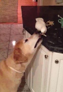 Bird Feeds Dog Noodles (video) https://www.youtube.com/watch?v=YvQ80LPCNVI .