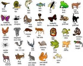 names names for birds names for animals names of birds