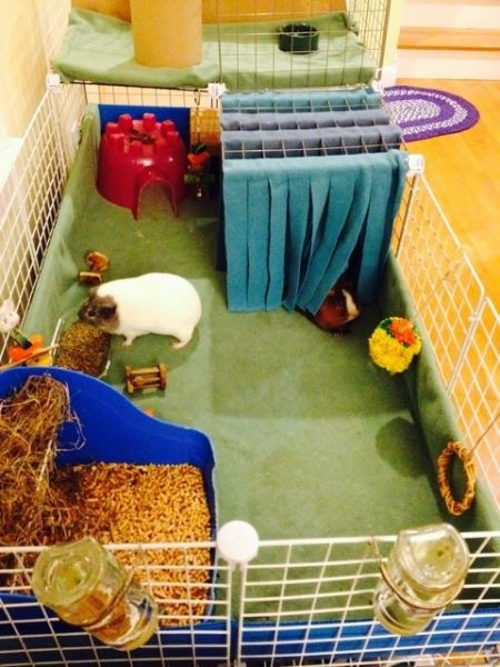 guinea pig cage, c and c cage