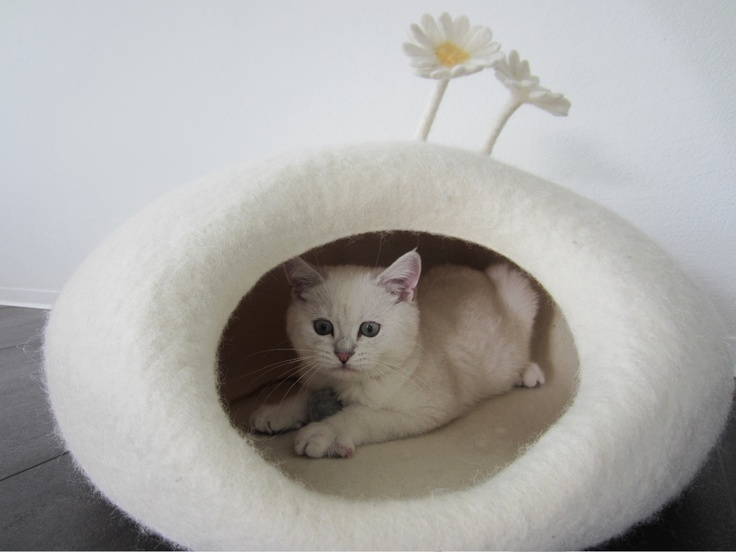 17 best images about felting cat caves on pinterest. Black Bedroom Furniture Sets. Home Design Ideas