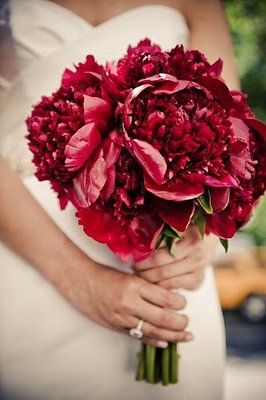 Red Peonies... beautiful for a fall wedding.