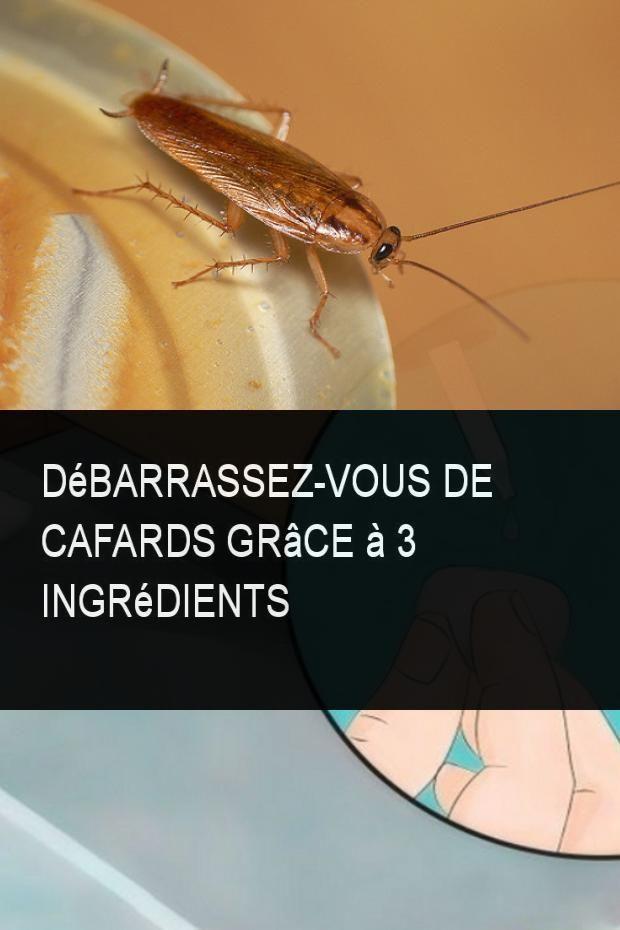 Debarrassez Vous De Cafards Grace A 3 Ingredients Cafards 3 Ingredients Trucs Et Astuces Maison