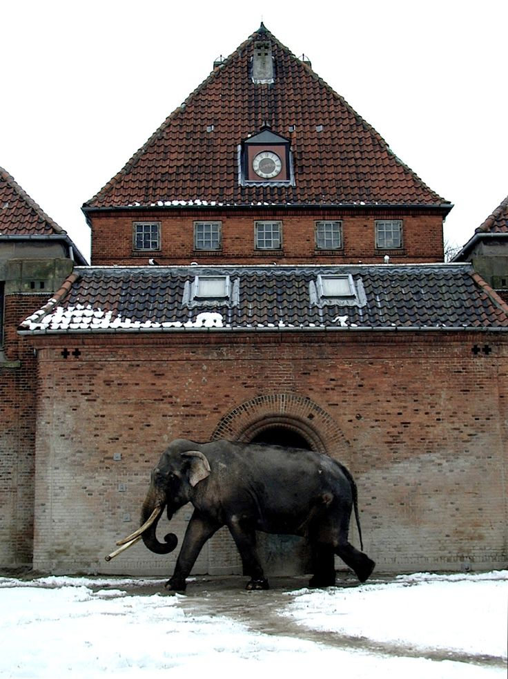 A home unknown to me signed a  foreigner in a foreign land   Ljj))    Copenhagen Zoo   (own archive)