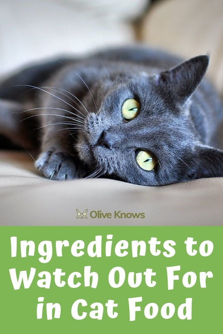 Ingredients To Watch Out For In Cat Food Oliveknows Cat Food Cats Cat Urine