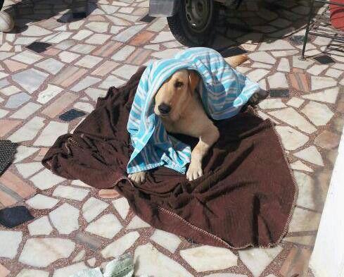 Sun bath ..realxinggggg.
